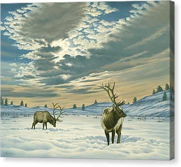 Winter Sky-elk   Canvas Print by Paul Krapf