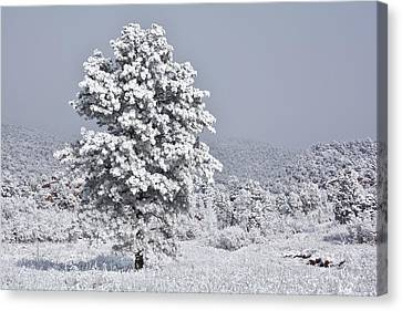Canvas Print featuring the photograph Winter Solitude by Diane Alexander