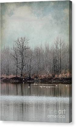 Geese Canvas Print - Winter Solitude by Jai Johnson