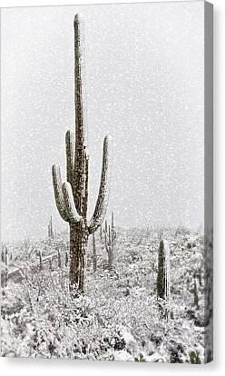 Winter Sonoran Style  Canvas Print by Saija  Lehtonen