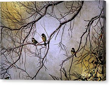 Winter Sparrow Dawn Canvas Print by Barbara Chichester