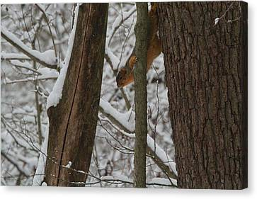 Winter Squirrel Canvas Print by Dan Sproul