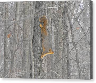 Winter Squirrel Canvas Print