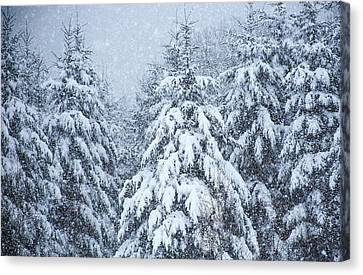 Canvas Print featuring the photograph Winter Storm by Dennis Bucklin