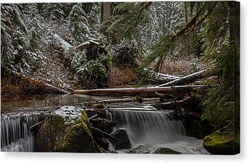 Winter Stream Canvas Print by Mike Reid