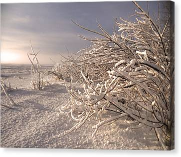Winter Sun ... Canvas Print by Juergen Weiss