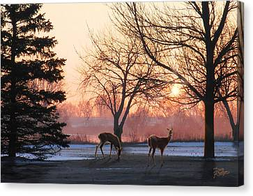 Bare Trees Canvas Print - Winter Sunrise Greeting by Doug Kreuger