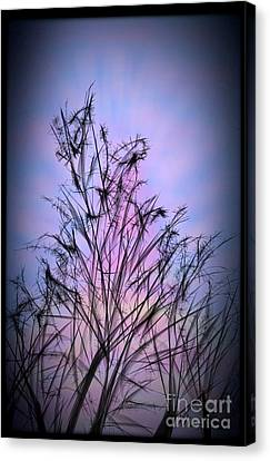 Winter Sunrise Canvas Print by Judy Via-Wolff