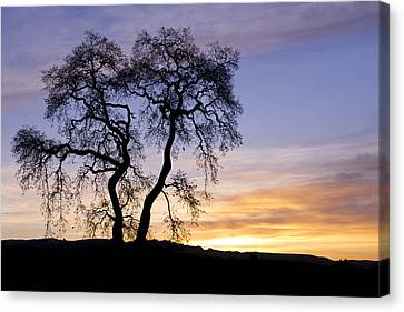 Canvas Print featuring the photograph Winter Sunrise With Tree Silhouette by Priya Ghose