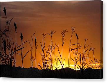 Winter Sunrise Canvas Print by Tammy Espino