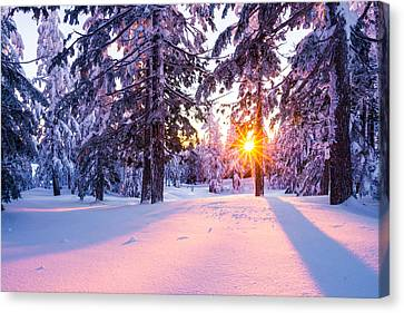 Winter Sunset Through Trees Canvas Print