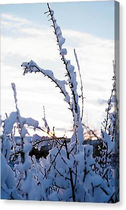 Winter Canvas Print by Terry Reynoldson