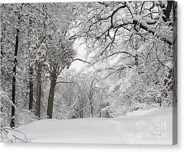 Winter Trail Canvas Print by E B Schmidt