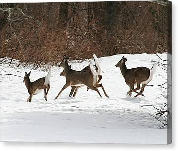 White Tailed Deer Winter Travel Canvas Print by Neal Eslinger