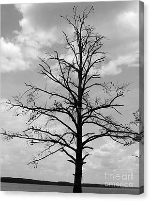 Canvas Print featuring the photograph Winter Tree by Andrea Anderegg