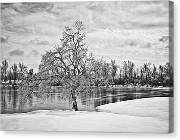 Winter Tree At The Park  B/w Canvas Print
