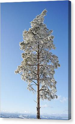 Winter Tree Germany Canvas Print by Francesco Emanuele Carucci