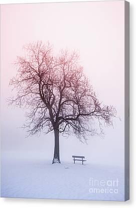 Winter Tree In Fog At Sunrise Canvas Print by Elena Elisseeva