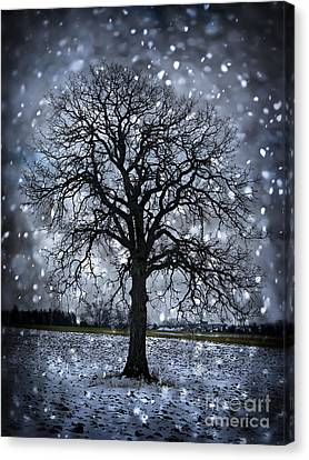Oak Canvas Print - Winter Tree In Snowfall by Elena Elisseeva