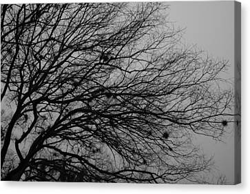 Winter Tree Canvas Print by Kimberly Oegerle