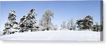 Winter Tree Line Canvas Print by Tim Gainey