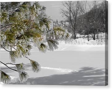 Winter Tree  Canvas Print by Paulina Szajek