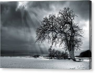 Winter Tree Canvas Print by EXparte SE