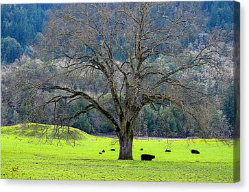 Winter Tree With Cows By The Umpqua River Canvas Print