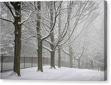 Winter Trees And Road Canvas Print by Elena Elisseeva
