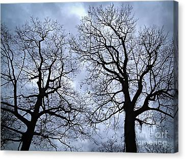 Winter Trees Canvas Print by Elena Elisseeva