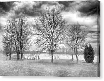 Winter Trees Canvas Print by Howard Salmon