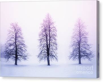 Winter Trees In Fog At Sunrise Canvas Print by Elena Elisseeva