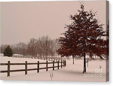 Winter Trees In Park Canvas Print