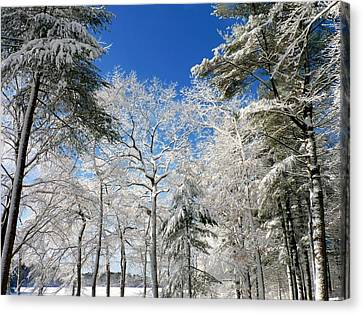 Canvas Print featuring the photograph Winter Trees by Janice Drew