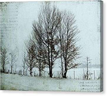 Kim Klassen Texture Canvas Print - Winter Trees by Lesley Jane Smithers
