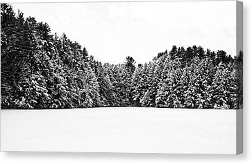 Winter Trees Mink Brook Hanover Nh Canvas Print by Edward Fielding