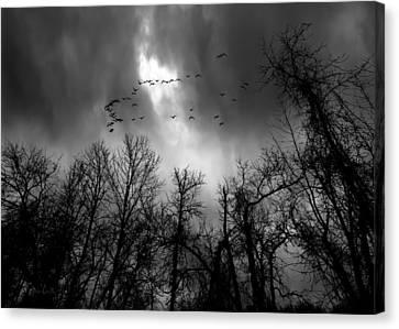 Winter Trees Moving Sky Canvas Print by Bob Orsillo