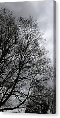 Winter Trees Number Three Canvas Print