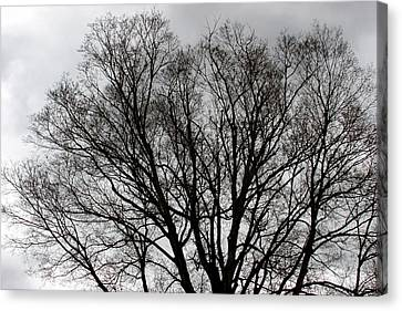 Winter Trees Number Two Canvas Print