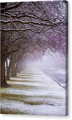 Winter Trees Canvas Print by Svetlana Sewell