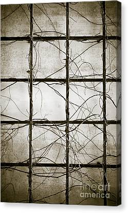 Winter Trellis Canvas Print by Edward Fielding
