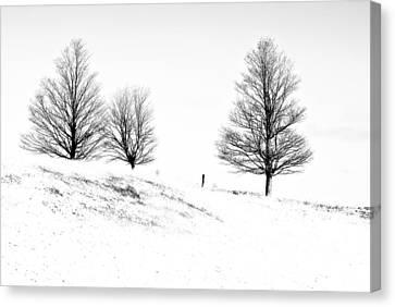 Winter Trinity Infrared Canvas Print by Steve Harrington