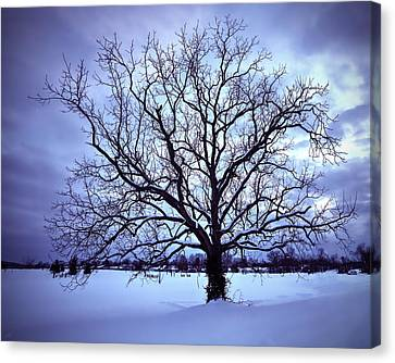 Winter Twilight Tree Canvas Print