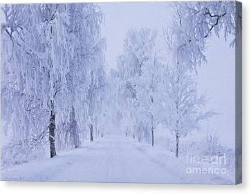 Harmonious Canvas Print - Winter by Veikko Suikkanen