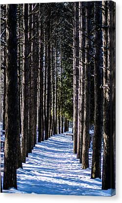 Winter Walkway Canvas Print by Randy Scherkenbach