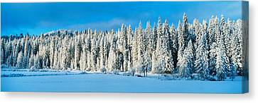 Winter Wawona Meadow Yosemite National Canvas Print by Panoramic Images