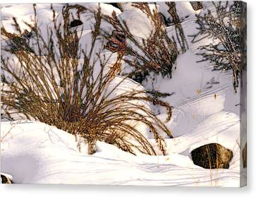 Winter Weeds Canvas Print