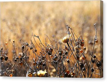 Canvas Print featuring the photograph Winter Weeds by Karen Slagle