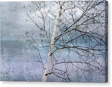 Winter White Birch  Canvas Print