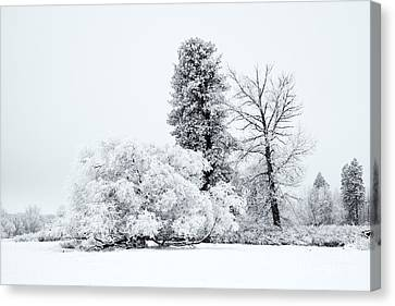 Winter White Canvas Print by Mike  Dawson